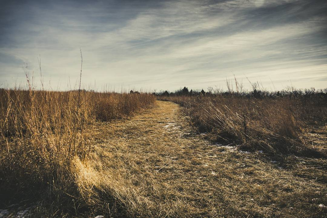 Prairie Fields